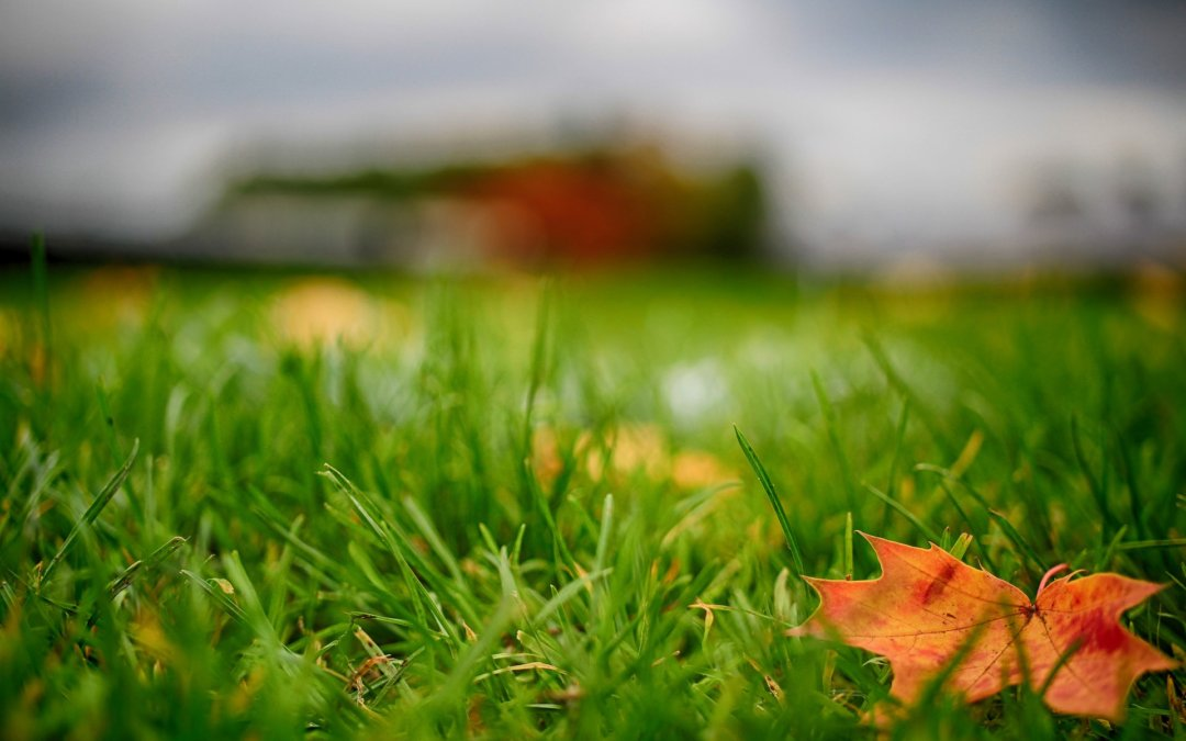 Fotbalový podzim skončí v půlce prosince, některé zápasy se budou dohrávat až v roce 2021